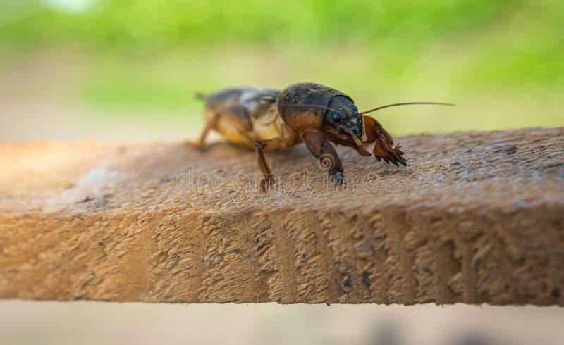 Επιβλαβές έντομο, γεωργικός έλεγχος παρασίτων παρασίτων στοκ φωτογραφίες με δικαίωμα ελεύθερης χρήσης