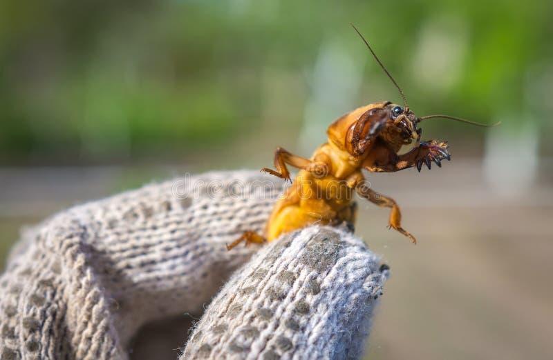 Επιβλαβές έντομο, γεωργικός έλεγχος παρασίτων παρασίτων στοκ φωτογραφία με δικαίωμα ελεύθερης χρήσης