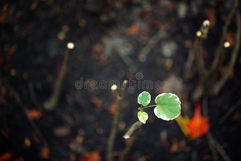 Επιζών στο ξηρό έδαφος, πράσινο δενδρύλλιο στο Μαύρο στοκ φωτογραφίες