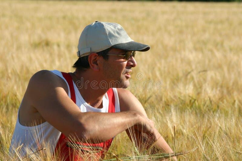 επιθεώρηση αγροτών κριθα στοκ εικόνες