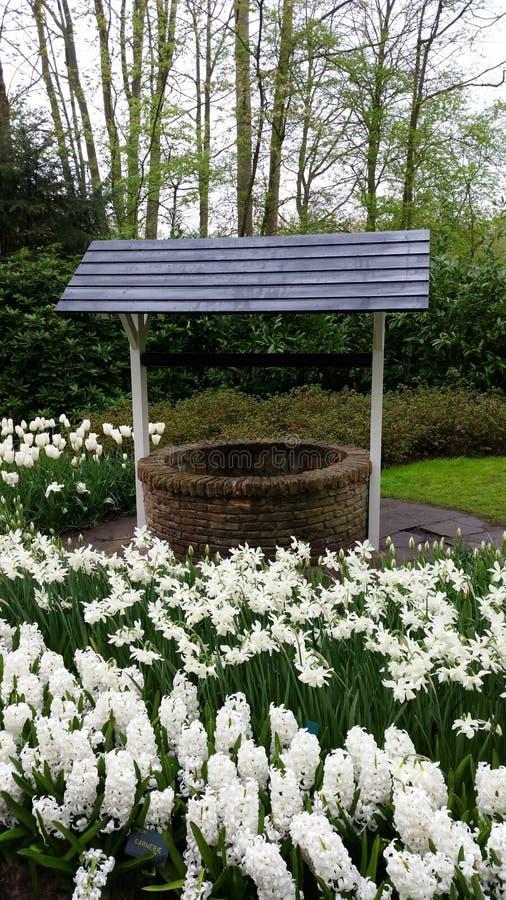 Επιθυμία που περιβάλλεται καλά από το άσπρους hyacinthus και τους ναρκίσσους στοκ εικόνες