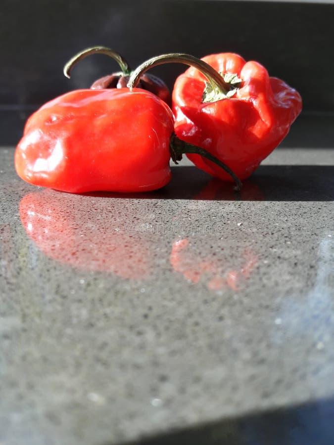 Επικίνδυνα πιπέρια τσίλι στοκ εικόνες με δικαίωμα ελεύθερης χρήσης