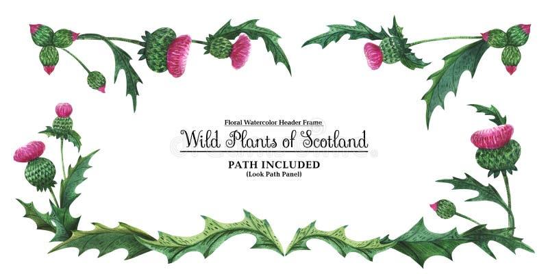 Επικεφαλής έμβλημα από τους κάρδους Floral σύμβολο της Σκωτίας στοκ φωτογραφίες