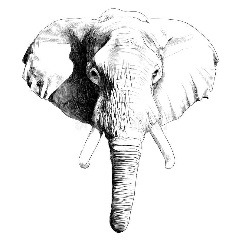 Επικεφαλής διάνυσμα σκίτσων ελεφάντων διανυσματική απεικόνιση