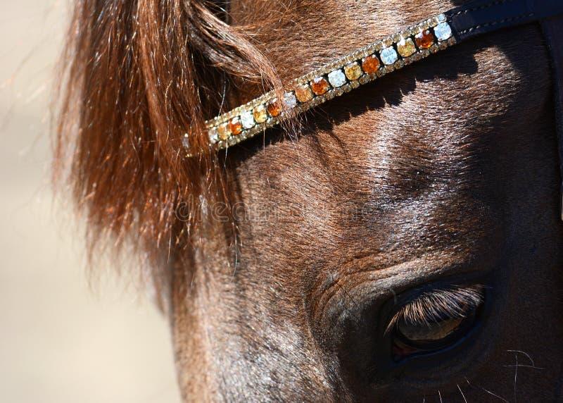 Επικεφαλής ενός κόκκινου αλόγου με ένα όμορφο χαλινάρι στοκ φωτογραφίες