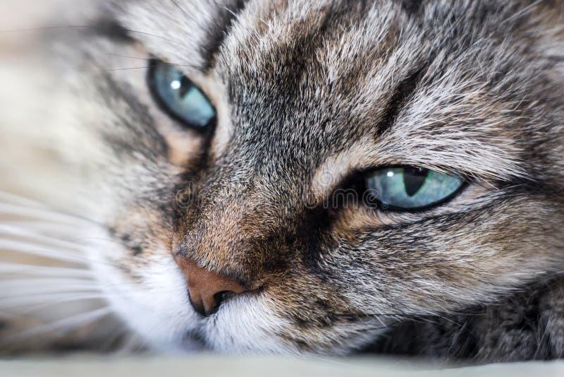επικεφαλής κινηματογράφηση σε πρώτο πλάνο γατών στοκ φωτογραφία με δικαίωμα ελεύθερης χρήσης