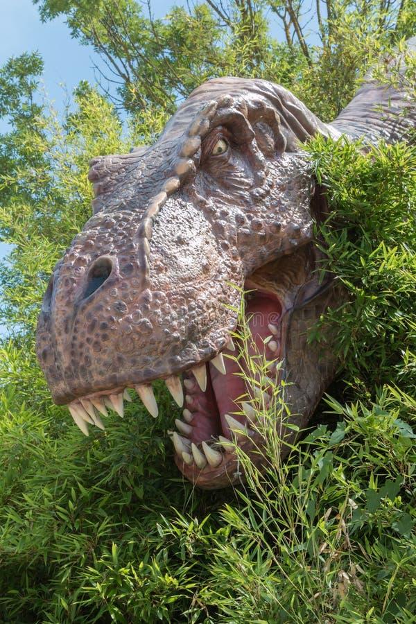 Επικεφαλής πρότυπο δεινοσαύρων τ-Rex μεταξύ της βλάστησης μέσα σε ένα πάρκο σε Ital στοκ εικόνα