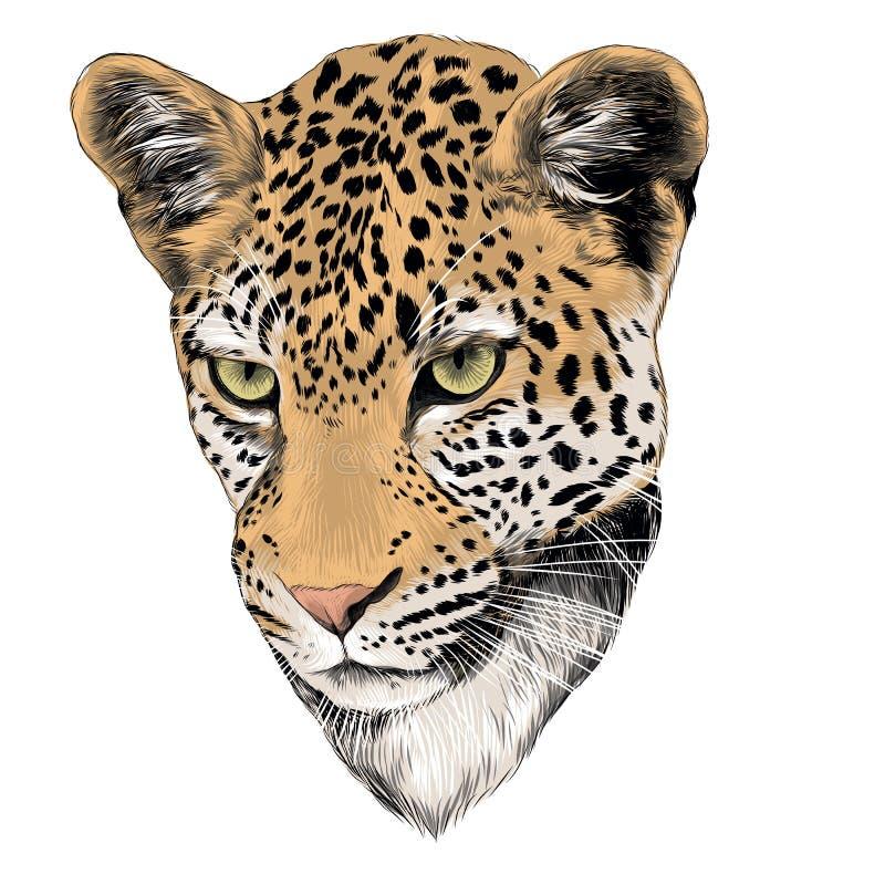 Επικεφαλής σκίτσο λεοπαρδάλεων, διάνυσμα διανυσματική απεικόνιση