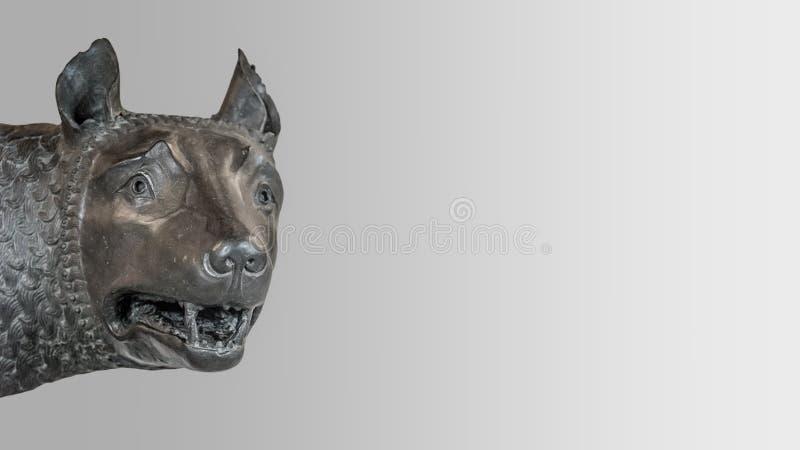 Επικεφαλής του αγάλματος λύκων μητέρων από τη Ρώμη, που απομονώνεται στο υπόβαθρο στοκ εικόνες