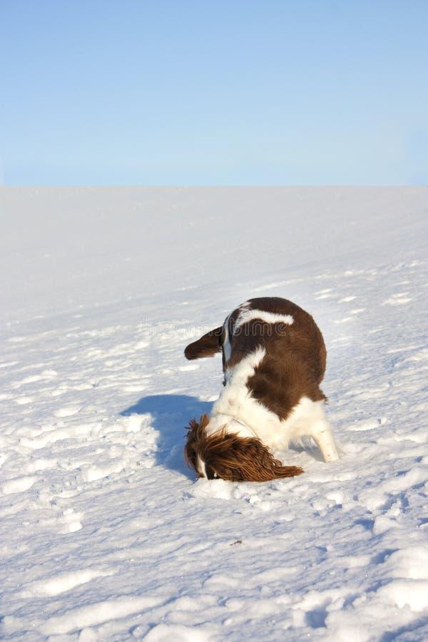 επικεφαλής χιόνι σκυλιών στοκ φωτογραφίες