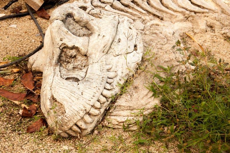 Επικεφαλής δεινόσαυρος κόκκαλων στοκ εικόνες