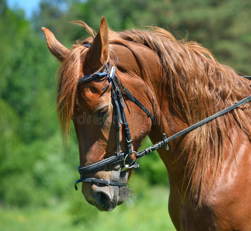 Επικεφαλής του αλόγου κόλπων στοκ φωτογραφία