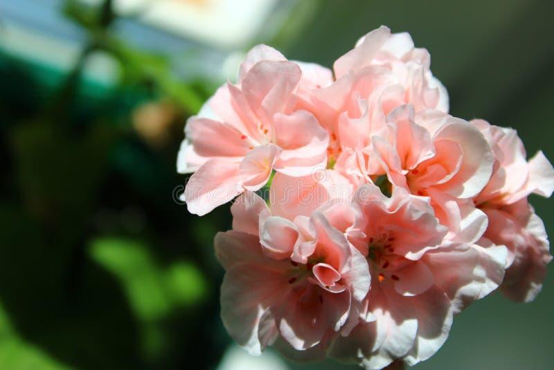 Επικεφαλής των λουλουδιών στοκ εικόνες με δικαίωμα ελεύθερης χρήσης