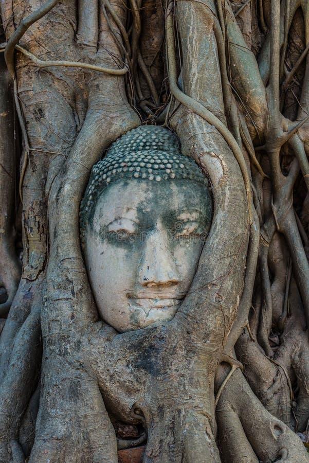 Επικεφαλής banyan δέντρο Wat Mahathat Ayutthaya Μπανγκόκ Ταϊλάνδη του Βούδα στοκ εικόνες