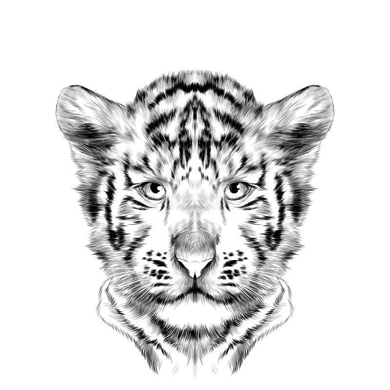 Επικεφαλής cub το άσπρο διάνυσμα σκίτσων τιγρών ελεύθερη απεικόνιση δικαιώματος