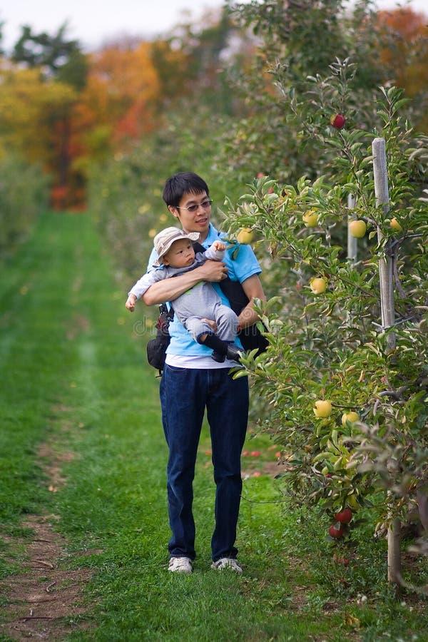Επιλογή μήλων του πρώτου φθινοπώρου στοκ εικόνες