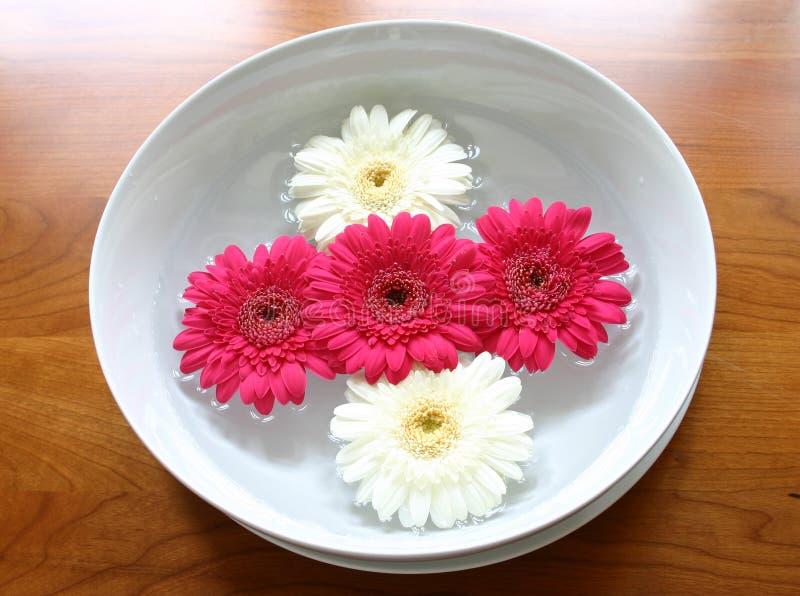 Download επιπλέοντα λουλούδια στοκ εικόνα. εικόνα από φύση, αποχής - 118385