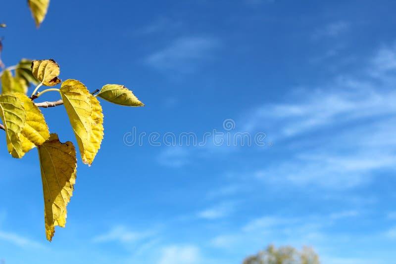 επιπλέοντα φύλλα φθινοπώρ& στοκ φωτογραφίες