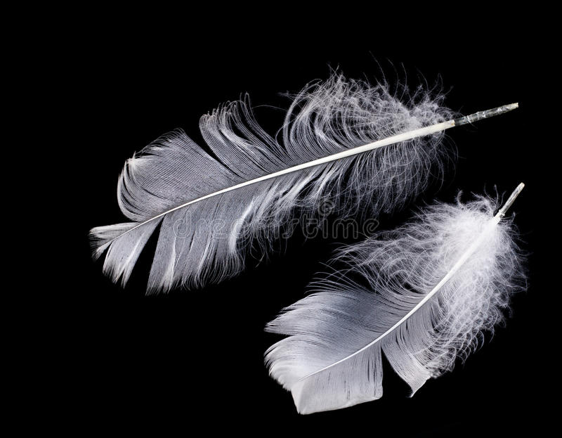 Επιπλέον άσπρο φτερό στο μαύρο υπόβαθρο στοκ φωτογραφία με δικαίωμα ελεύθερης χρήσης