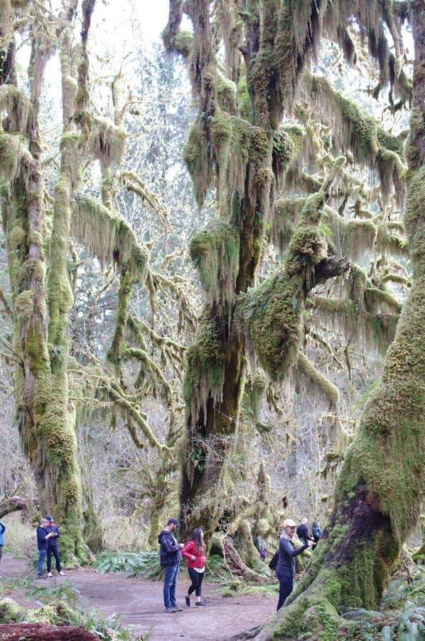 Επισκέπτες στο συγκρατημένο τροπικό δάσος στοκ εικόνες
