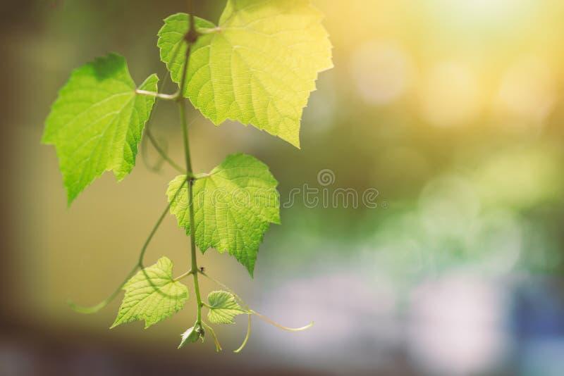 Επιστήμη της έννοιας πρασινάδων οικολογίας στοκ εικόνα