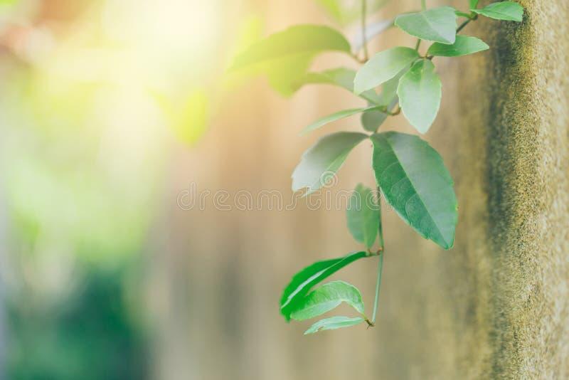 Επιστήμη της έννοιας πρασινάδων οικολογίας στοκ φωτογραφία με δικαίωμα ελεύθερης χρήσης