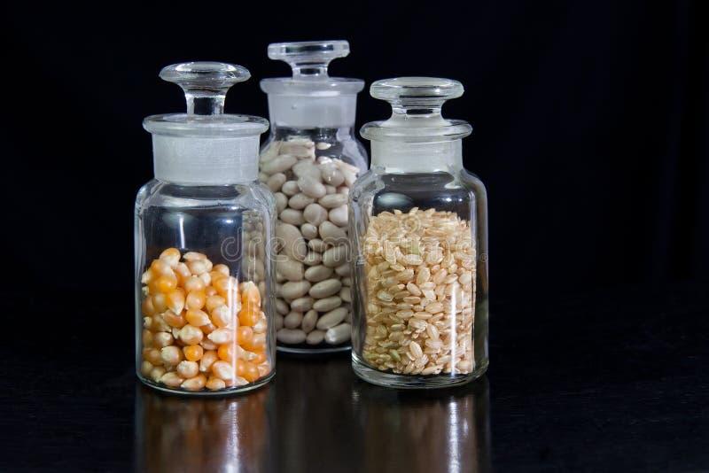 Επιστήμη τροφίμων - σπόροι στοκ εικόνες