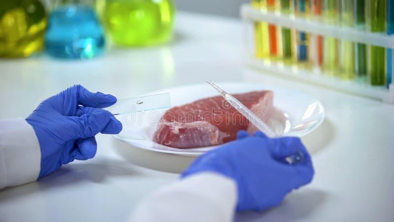 Επιστήμονας που διευθύνει την ποιοτική δοκιμή κρέατος, στάζοντας το υγρό στο γυαλί, ξέσπασμα ASF στοκ φωτογραφίες