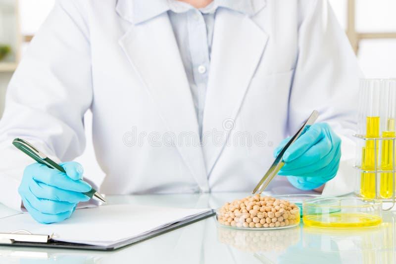Επιστήμονας που εξετάζει τη γενετική έρευνα τροποποίησης σόγιας στοκ φωτογραφία