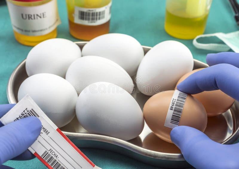 Επιστημονικό εμπορικό σήμα με τα αυγά ετικετών για να εξετάσει σε κακή κατάσταση μέσα στοκ φωτογραφία με δικαίωμα ελεύθερης χρήσης