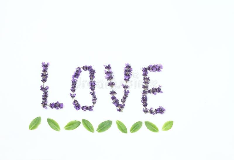 Επιστολές της αγάπης από τα φρέσκα lavender λουλούδια στοκ εικόνες με δικαίωμα ελεύθερης χρήσης