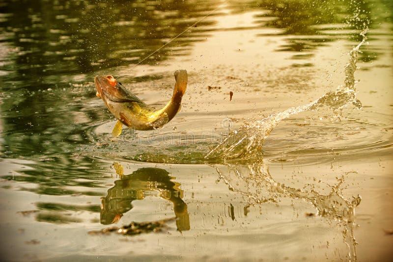 Επιτυχής στιγμή αλιείας στοκ φωτογραφίες με δικαίωμα ελεύθερης χρήσης