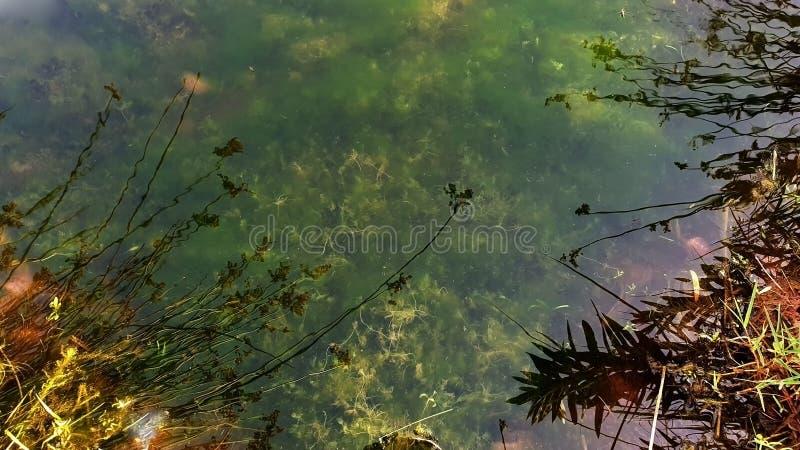 Επιφάνεια του νερού στοκ φωτογραφία με δικαίωμα ελεύθερης χρήσης