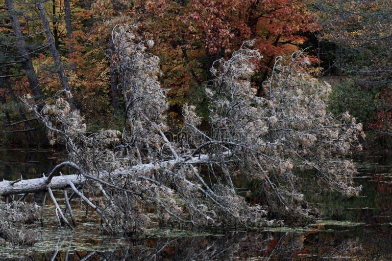 Επιφύλαξη βόρειας πικρίας - Κλίβελαντ - Οχάιο - ΗΠΑ στοκ εικόνες