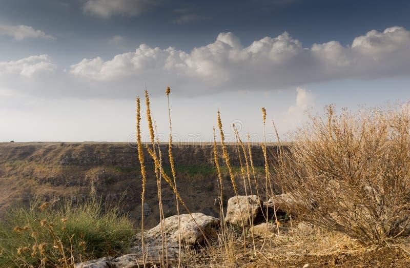 Επιφύλαξη φύσης του Ισραήλ Gamla στοκ εικόνα με δικαίωμα ελεύθερης χρήσης