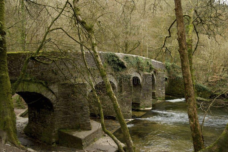 Επιφύλαξη φύσης Plymbridge στοκ φωτογραφίες με δικαίωμα ελεύθερης χρήσης