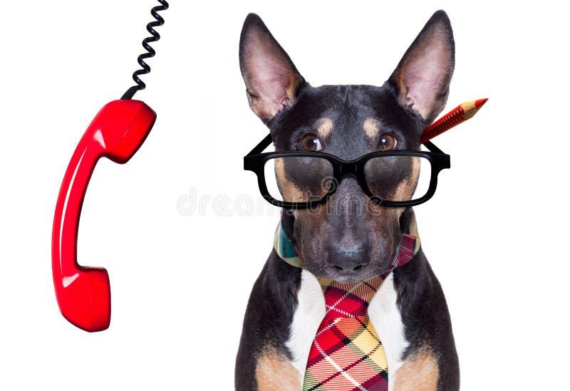 Επιχειρησιακό κύριο σκυλί στοκ εικόνα