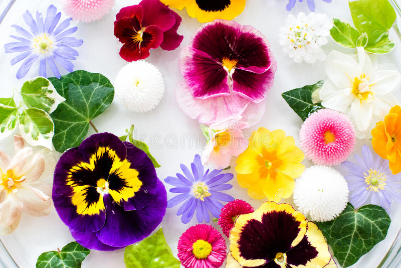 Επιλεγμένα λουλούδια στοκ εικόνα