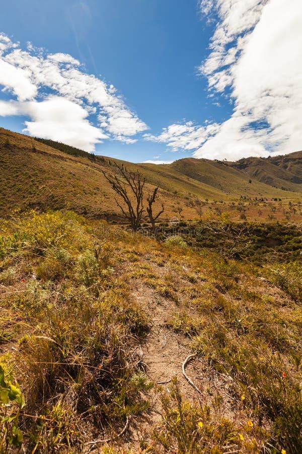 Επιλογές βουνών των Άνδεων, Νότια Αμερική στοκ εικόνες με δικαίωμα ελεύθερης χρήσης