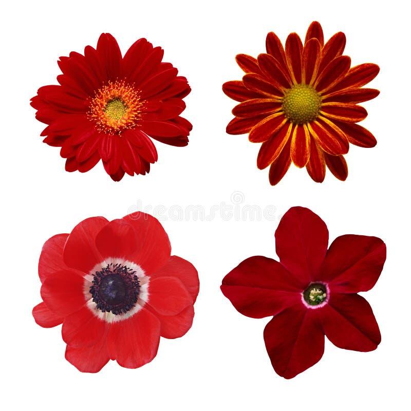 Επιλογή των διάφορων λουλουδιών που απομονώνεται στο άσπρο υπόβαθρο στοκ φωτογραφία με δικαίωμα ελεύθερης χρήσης