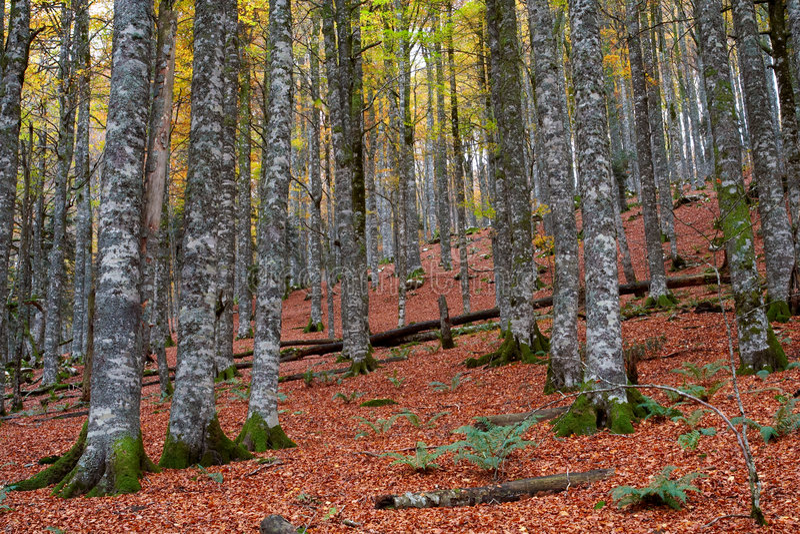 εποχή πτώσης χρωμάτων φθινοπώρου στοκ εικόνες