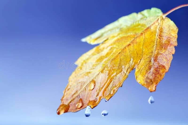 Εποχιακό υπόβαθρο φθινοπώρου Καιρικό χαρακτηριστικό φθινόπωρο στοκ εικόνα με δικαίωμα ελεύθερης χρήσης