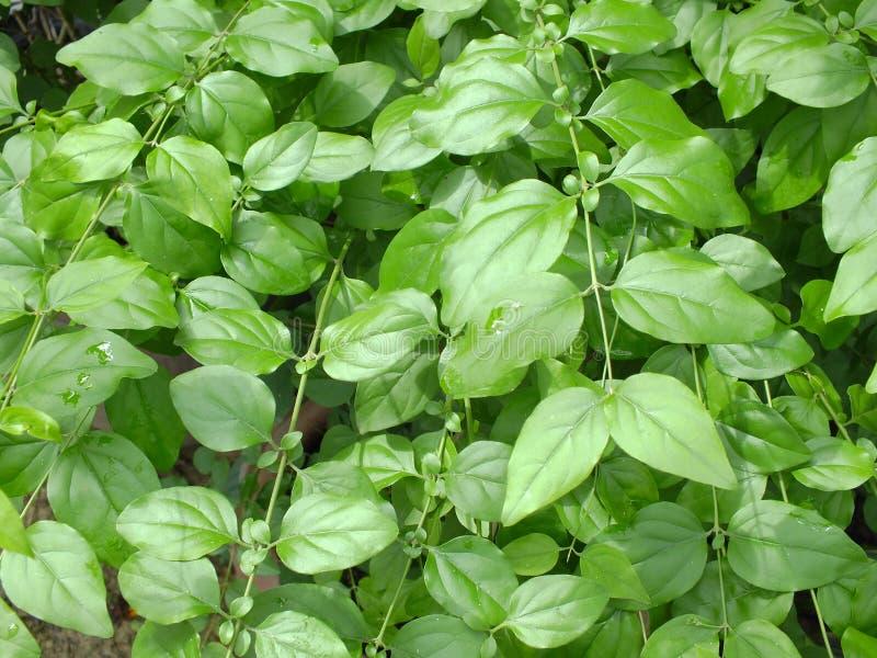 λεπτομέρεια των εγκαταστάσεων άδειας στο πράσινο υπόβαθρο υποβάθρου φύσης κήπων στοκ εικόνες με δικαίωμα ελεύθερης χρήσης