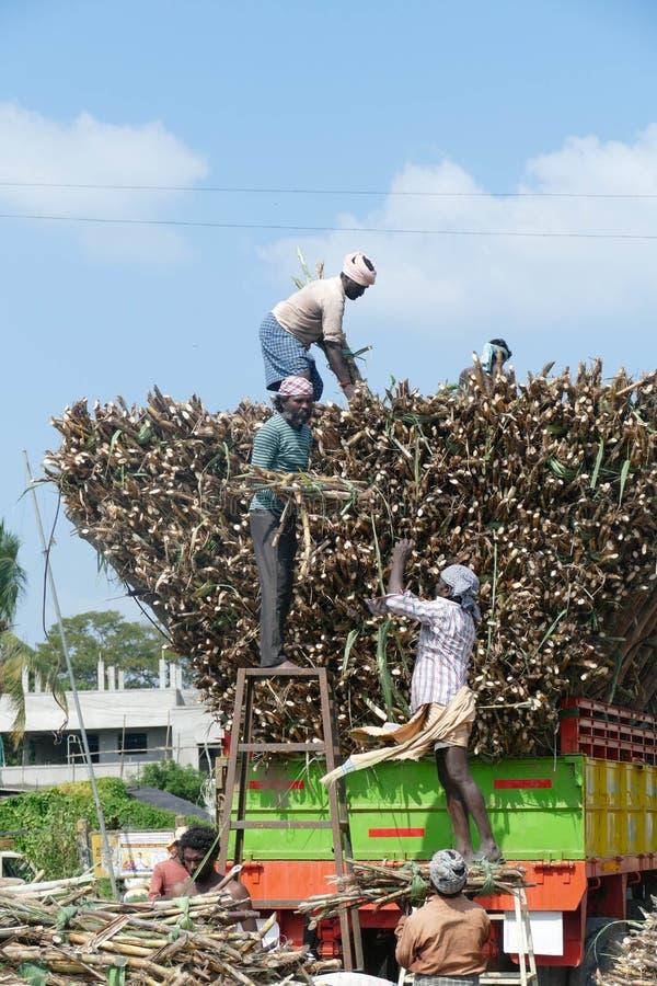 Εργαζόμενοι που φορτώνουν ζαχαροκάλαμο σε φορτηγό στοκ εικόνες με δικαίωμα ελεύθερης χρήσης