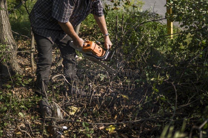 Εργαζόμενος εμπόρων ξυλείας υλοτόμων στο τέμνον δέντρο ξυλείας καυσόξυλου στο δάσος με το πορτοκαλί αλυσιδοπρίονο στοκ φωτογραφίες