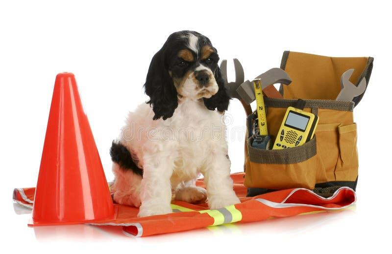Εργαζόμενο σκυλί στοκ φωτογραφίες