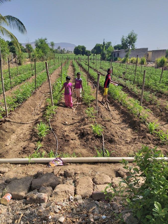 Εργαζόμενων παιδιών στο ινδικό του χωριού αγρόκτημα στοκ φωτογραφία με δικαίωμα ελεύθερης χρήσης