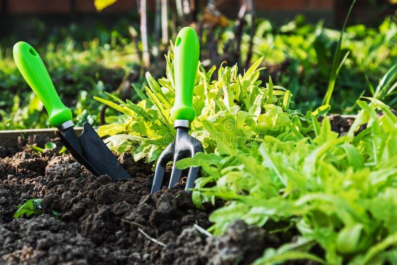Εργαλεία κήπων που κολλιούνται στο έδαφος για να εργαστεί στοκ εικόνες