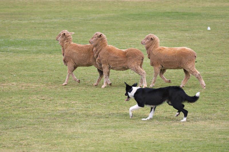 εργασία σκυλιών στοκ εικόνες
