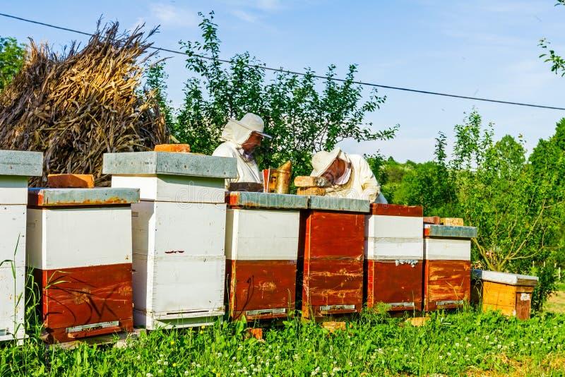 Εργασία στο μελισσουργείο στοκ φωτογραφίες